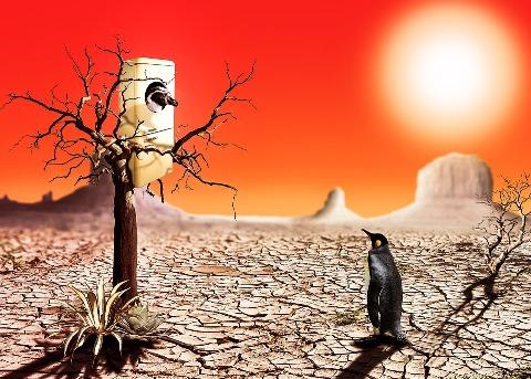 Hot Vegas Desert
